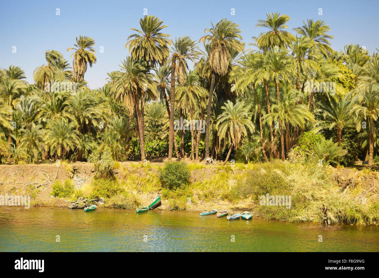 Egypt - bank of the Nile, riverside landscape of the valley of Nile, road to Aswan town, Egypt - Stock Image
