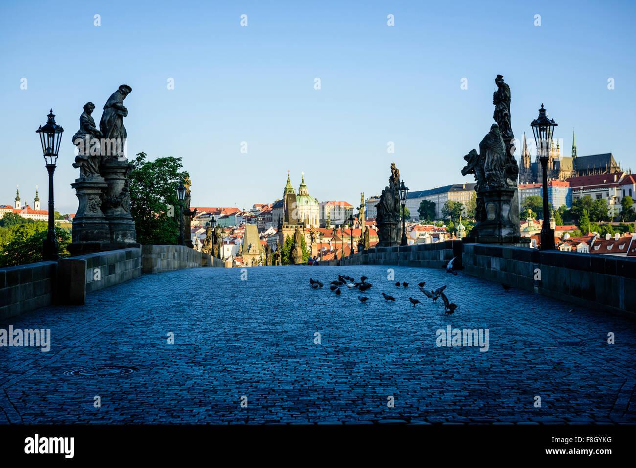 Pigeons on brick path in Prague cityscape, Czech Republic - Stock Image