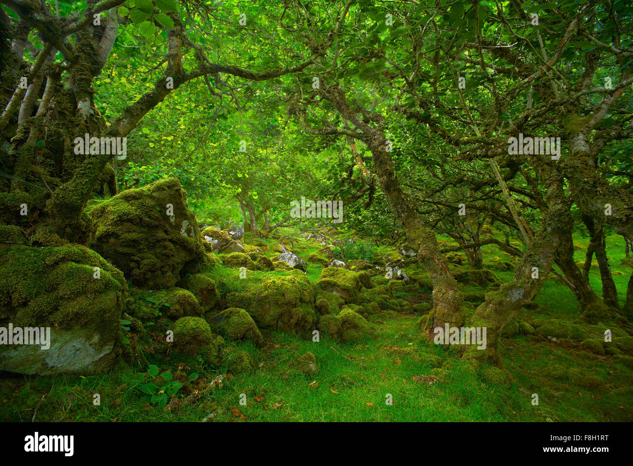 Trees over mossy rocks in forest Stock Photo