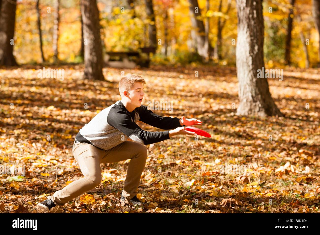 Teenage boy catching flying disc in autumn forest - Stock Image