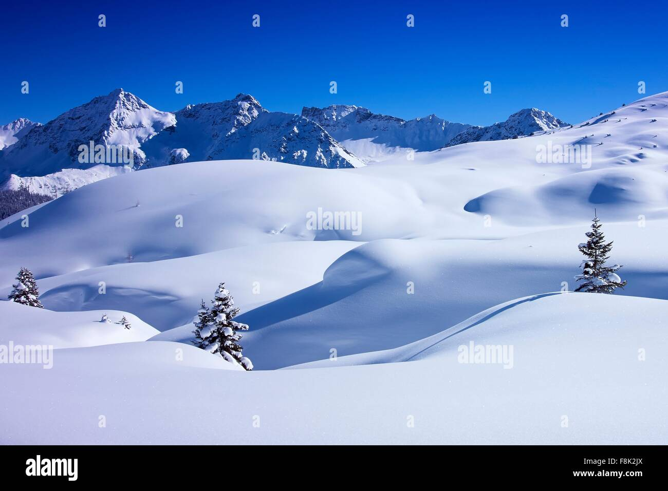 Deep snow covered landscape and fir trees, Arosa, Switzerland - Stock Image