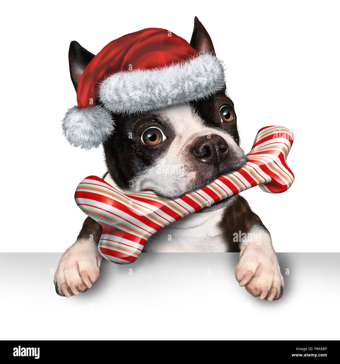 Christmas holiday dog pet sign for veterinary medicine festive winter advertising and marketing message with a cute - Stock Image