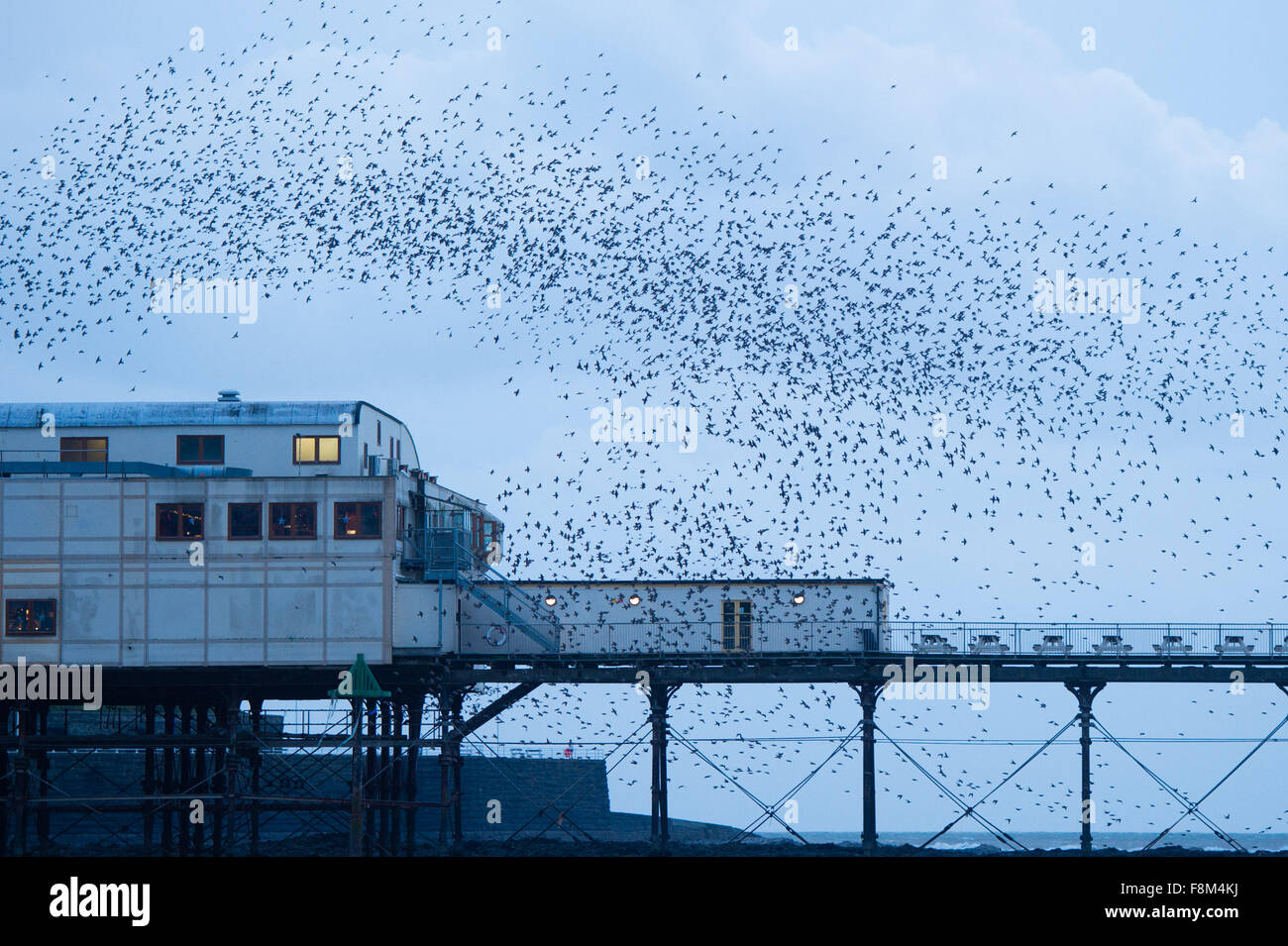 Aberystwyth Wales UK, Monday 07 December 2015 A huge flock of starlings perform spectacular displays in the air Stock Photo