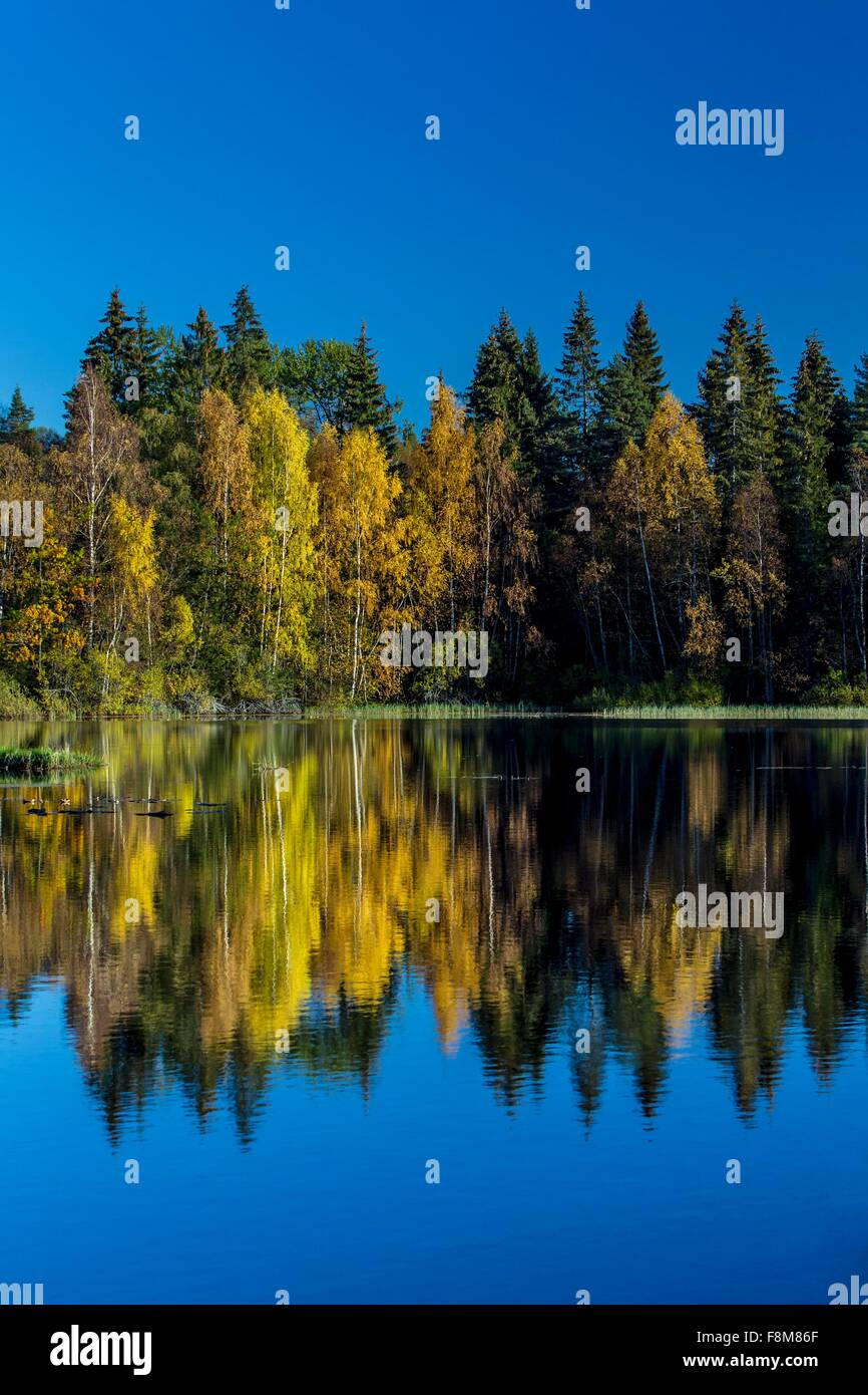 Pine trees and blue sky reflecting in lake, Drobak, Norway - Stock Image