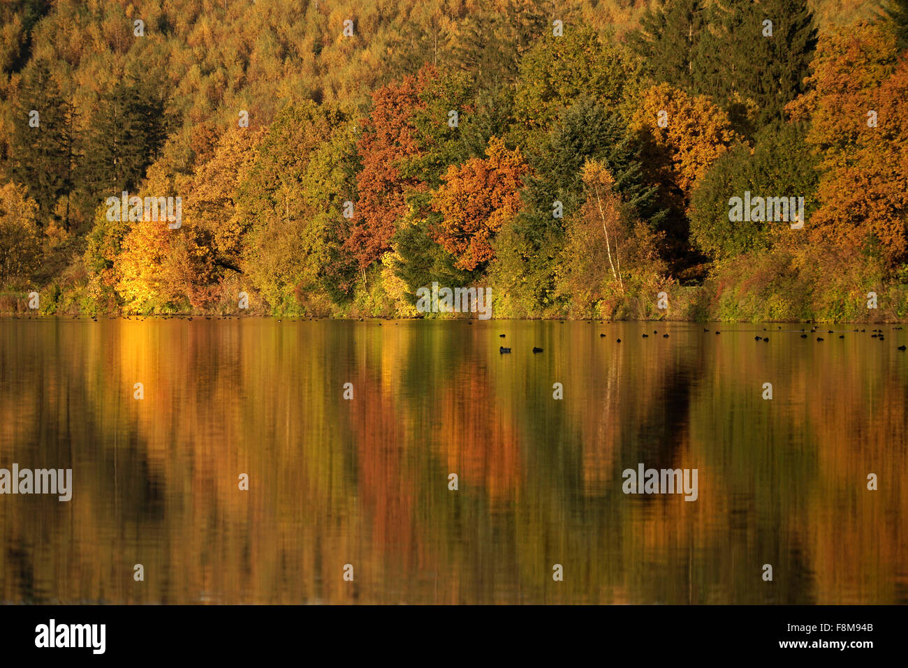 Colourful deciduous forest in autumn, Lake Sorpesee, Langscheid, Sauerland, North Rhine-Westphalia, Germany, Europe Stock Photo