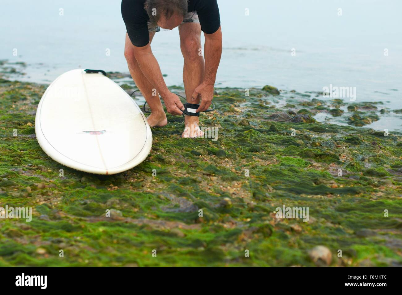 Surfer tying surfboard leash to ankle - Stock Image