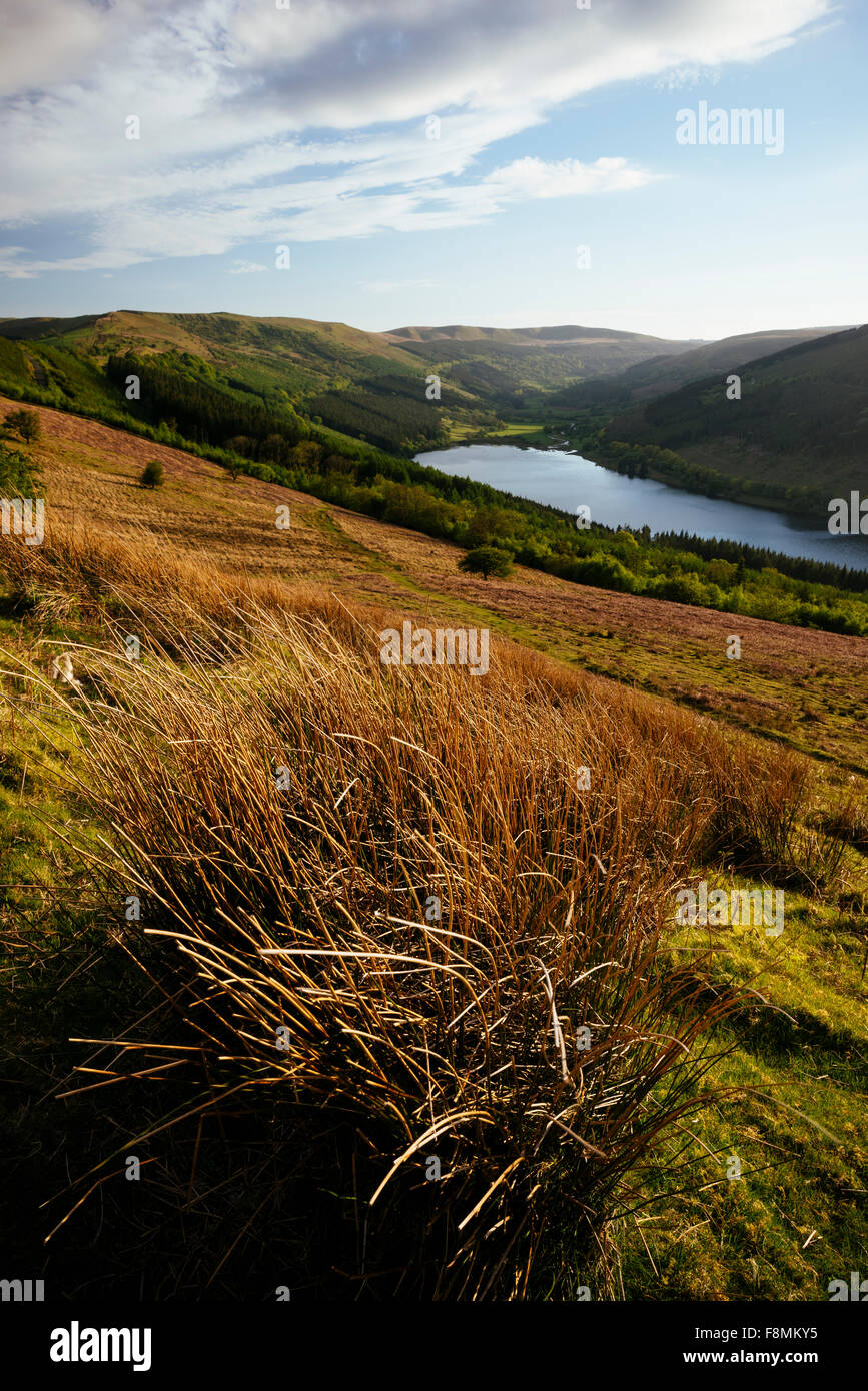 Talybont Reservoir and Glyn Collwn valley in the Brecon Beacons National Park, Powys, Wales, United Kingdom, Europe - Stock Image