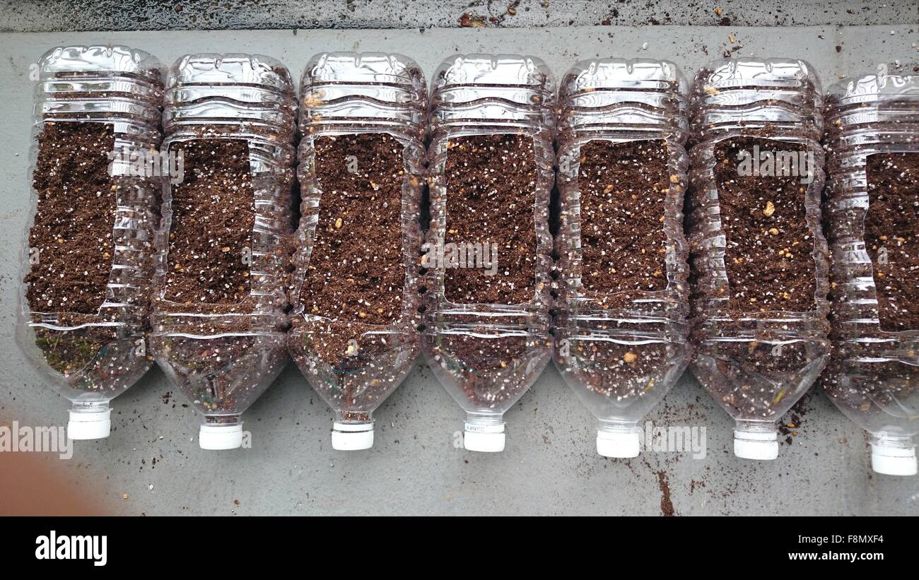 Eco-friendly gardening in house  terrace in used pet bottles - Stock Image
