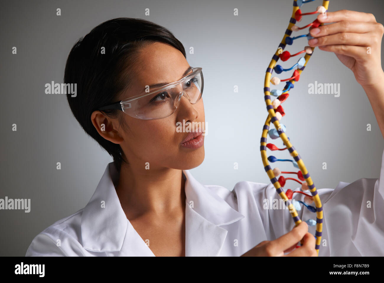 Female Scientist Studying Molecular Model In Shape Of Helix - Stock Image