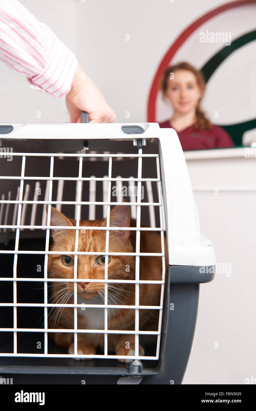 Woman Taking Cat To Vet In Carrier - Stock Image