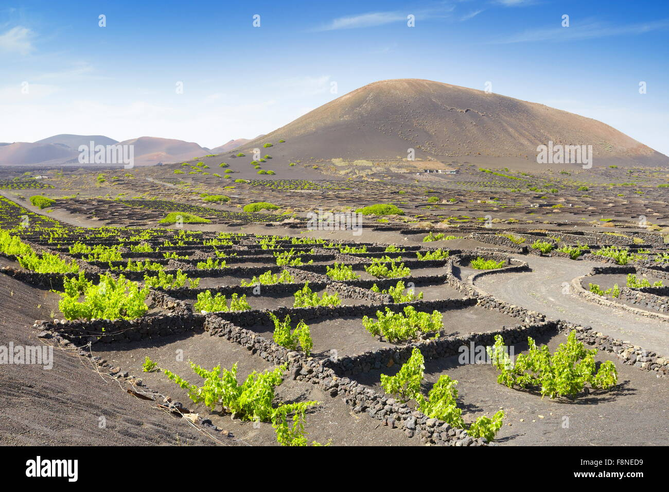 Plantation of vines in volcanic ground in La Geria, Lanzarote Island, Canary Islands, Spain - Stock Image