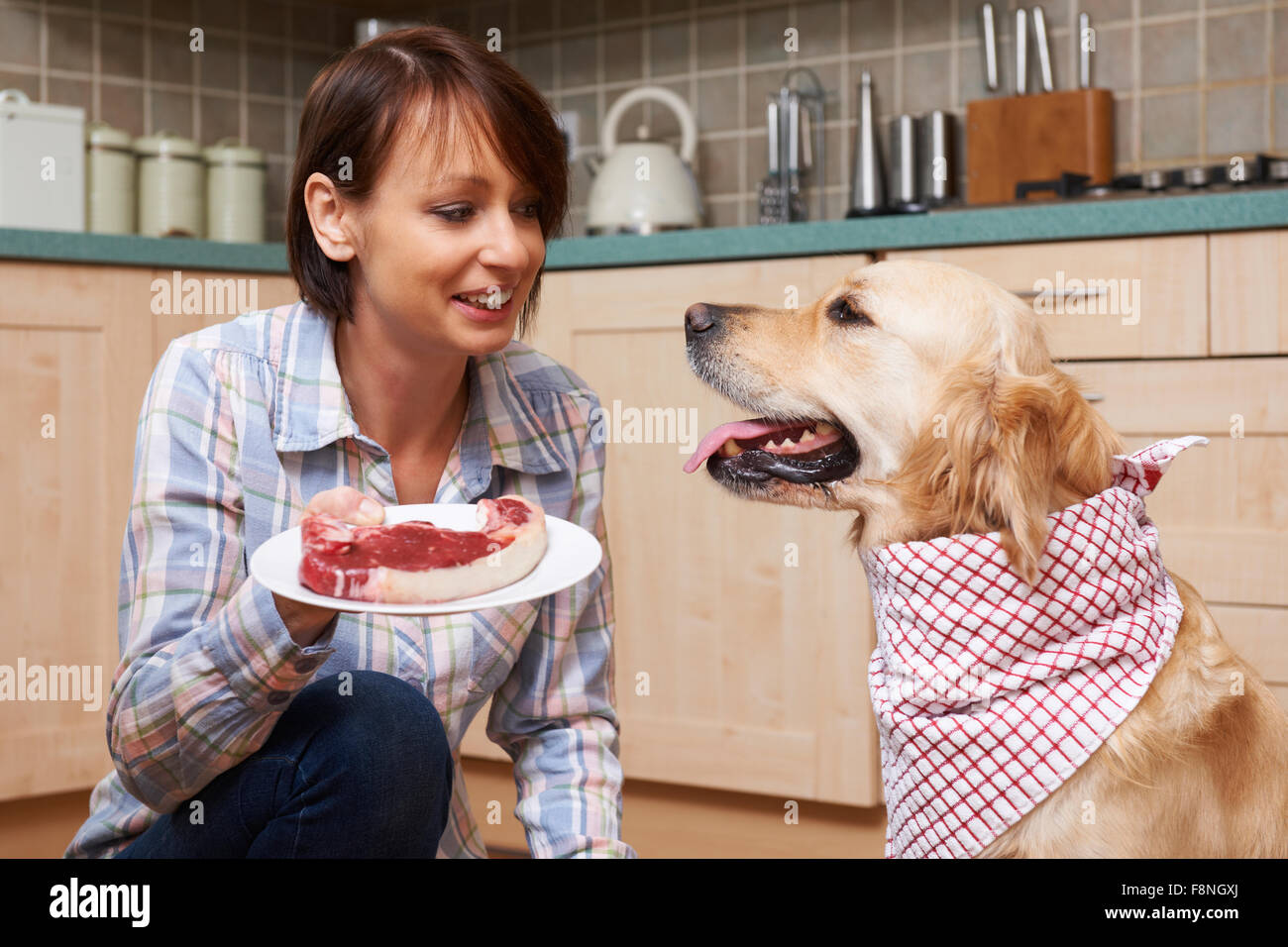 Owner Spoiling Pet Dog With Meal Of Fresh Steak - Stock Image