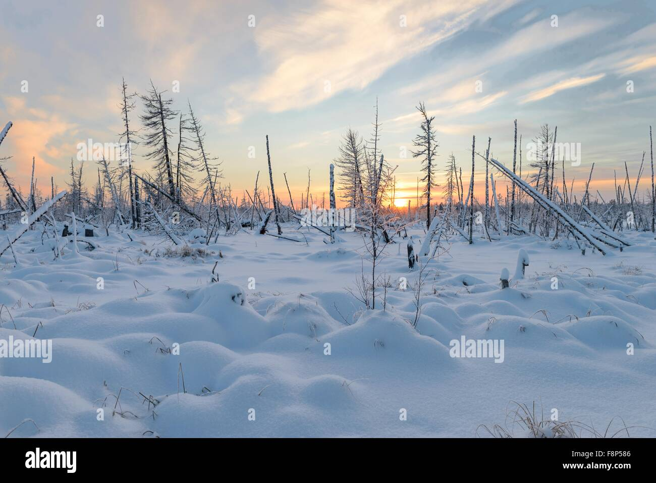 beautiful landscapes of the wild nature of the Yamal Peninsula, Russia - Stock Image