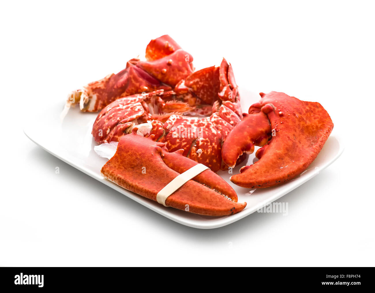 Claws and Tail of a Cooked European Common Lobster isolated on a white studio background. - Stock Image