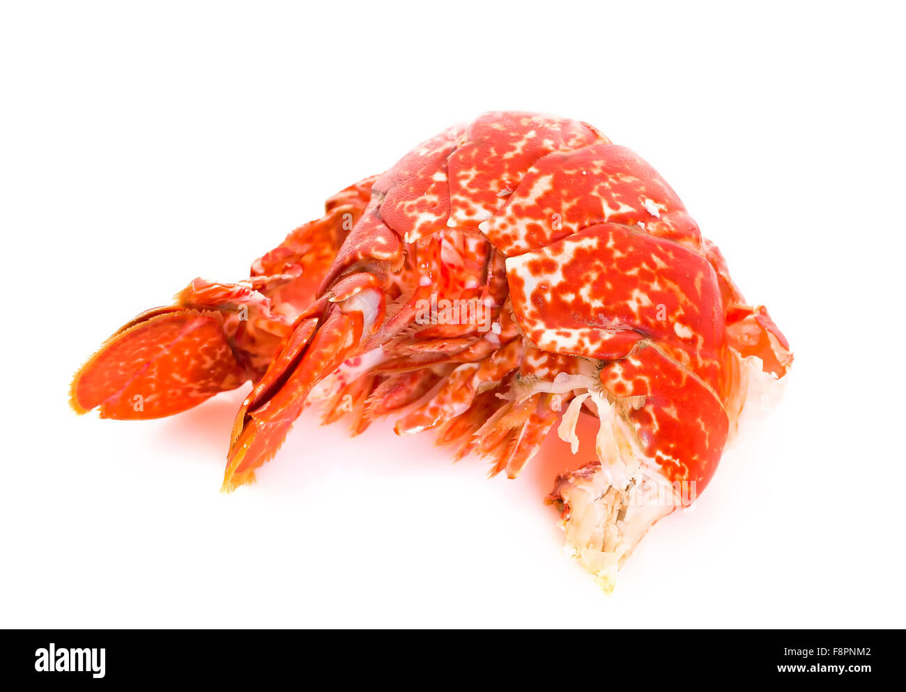 Tail of a Cooked European Common Lobster isolated on a white studio background. Stock Photo