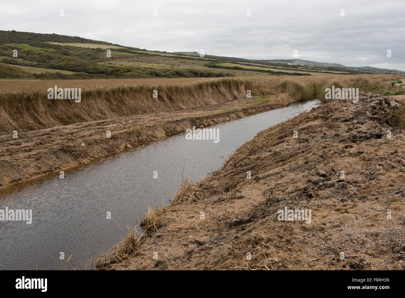 Partially cleared ditch with fresh water and reed beds behind Chesil Beach on an overcast autumn day in Dorset - Stock Image