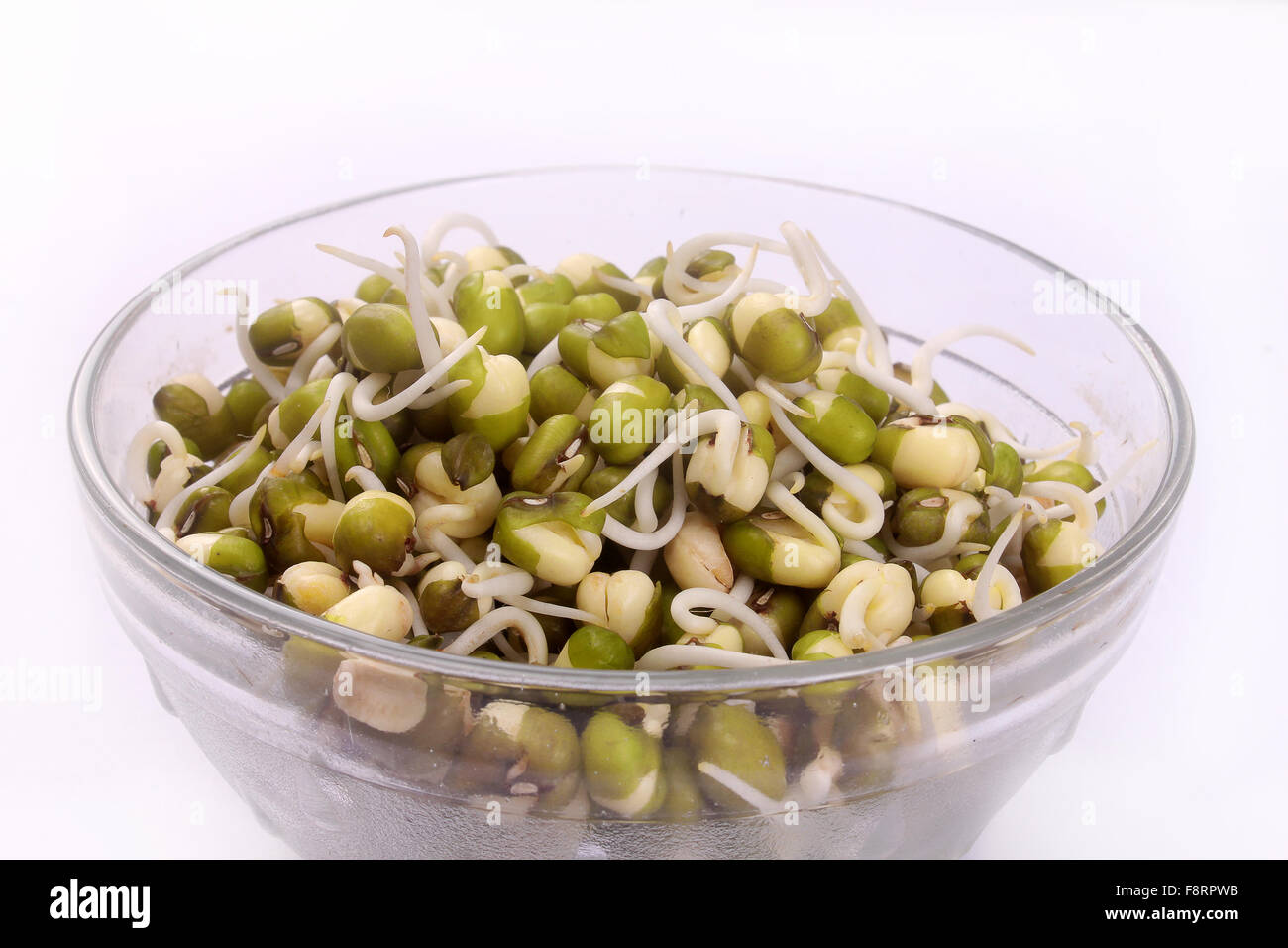 mung bean sprouts on bowl - Stock Image