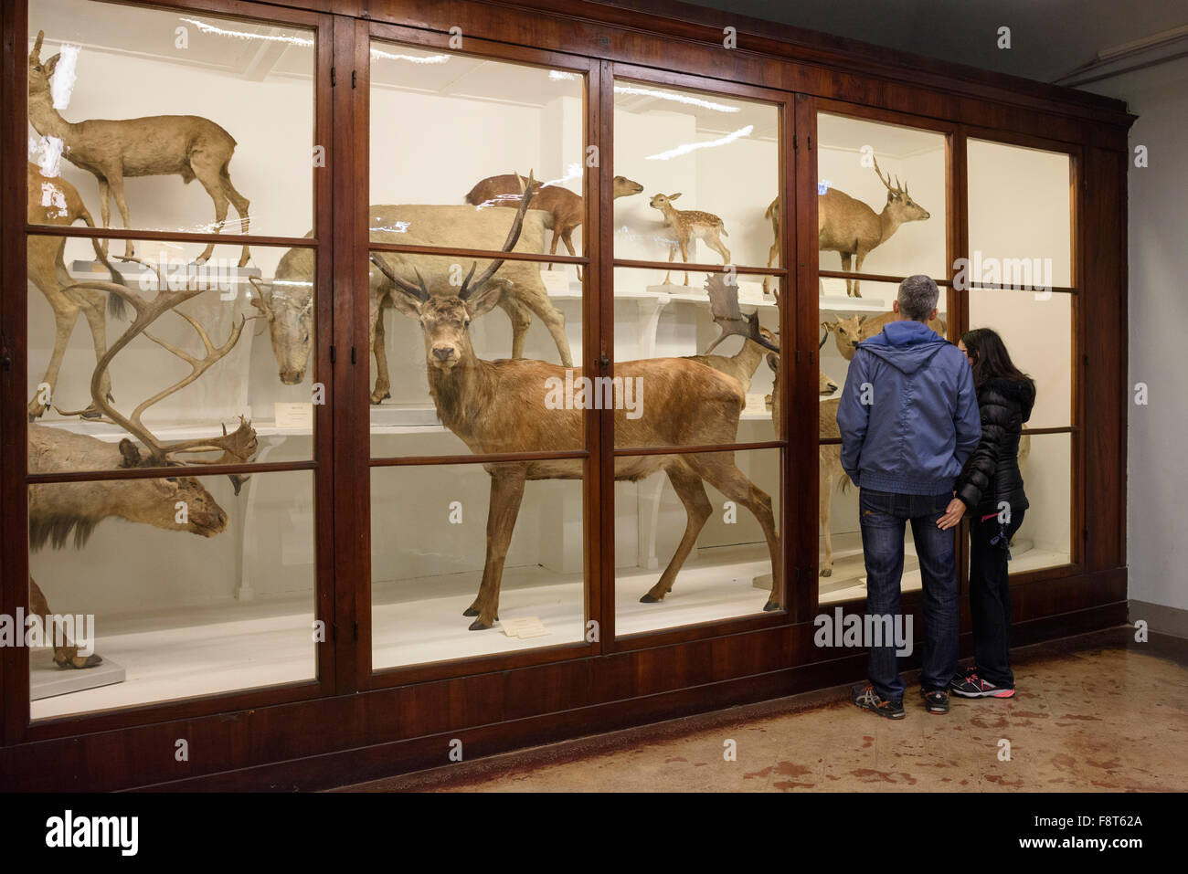 Florence. Italy. La Specola, Museum of Zoology and Natural History. - Stock Image