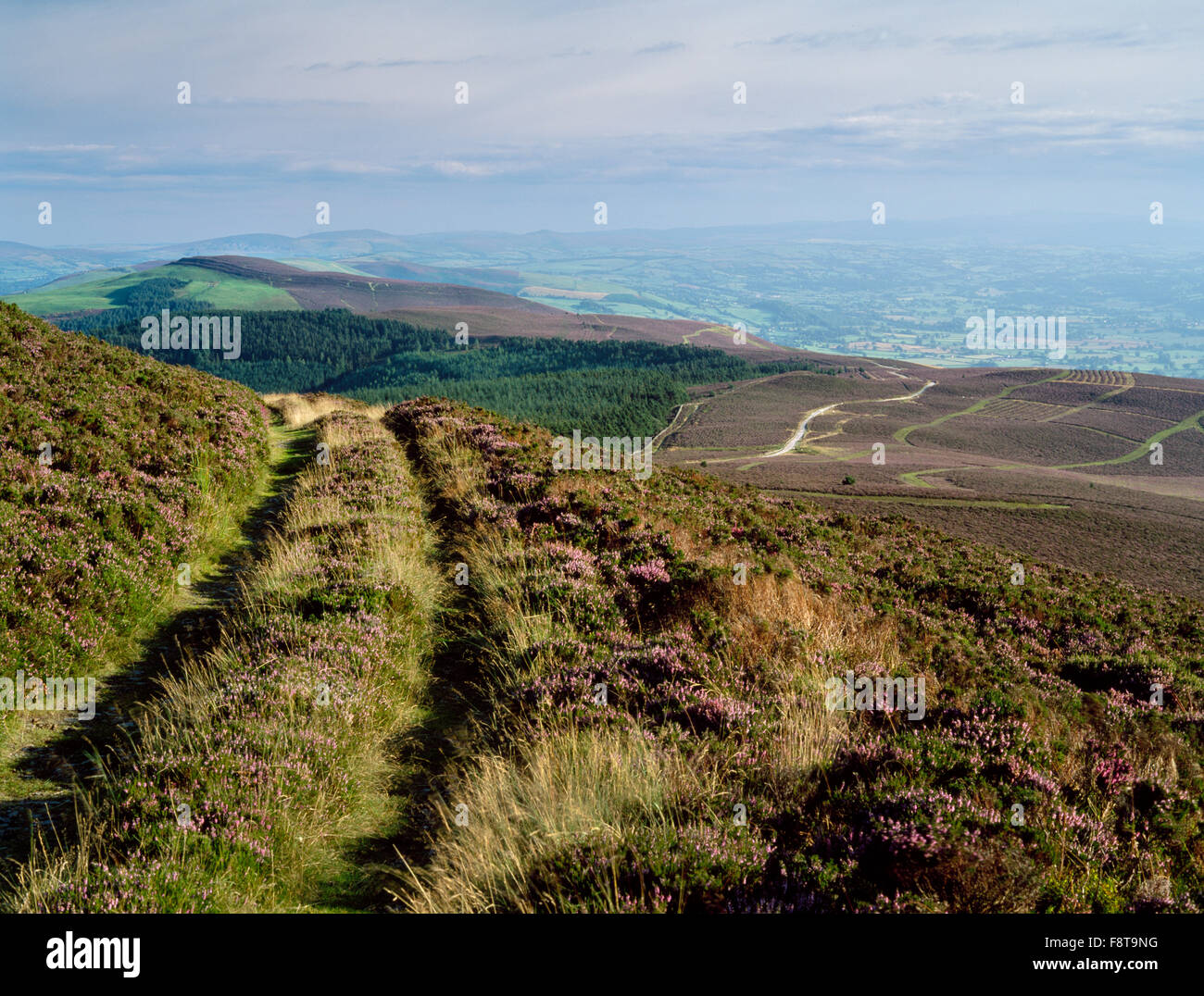 Looking S from summit of Moel Famau along Offa's Dyke Path to the multiple ramparts of Foel Fenlli hillfort, - Stock Image
