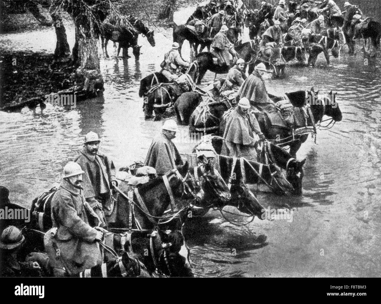 French train horses resting in a river on their way to Verdun - Stock Image