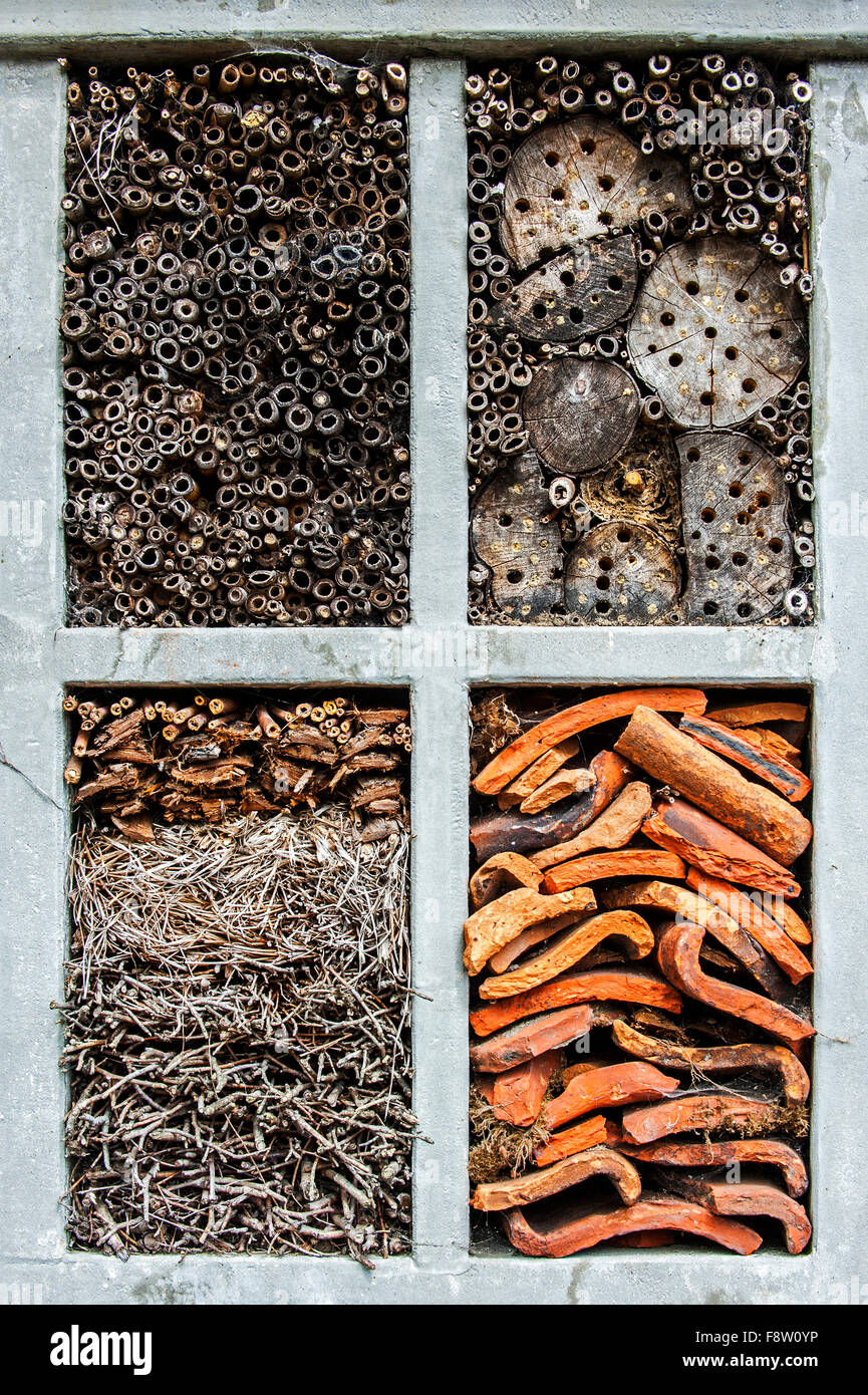 Insect hotel for solitary bees and cavities for hibernating ladybirds in reed and bamboo stems, drilled holes in - Stock Image