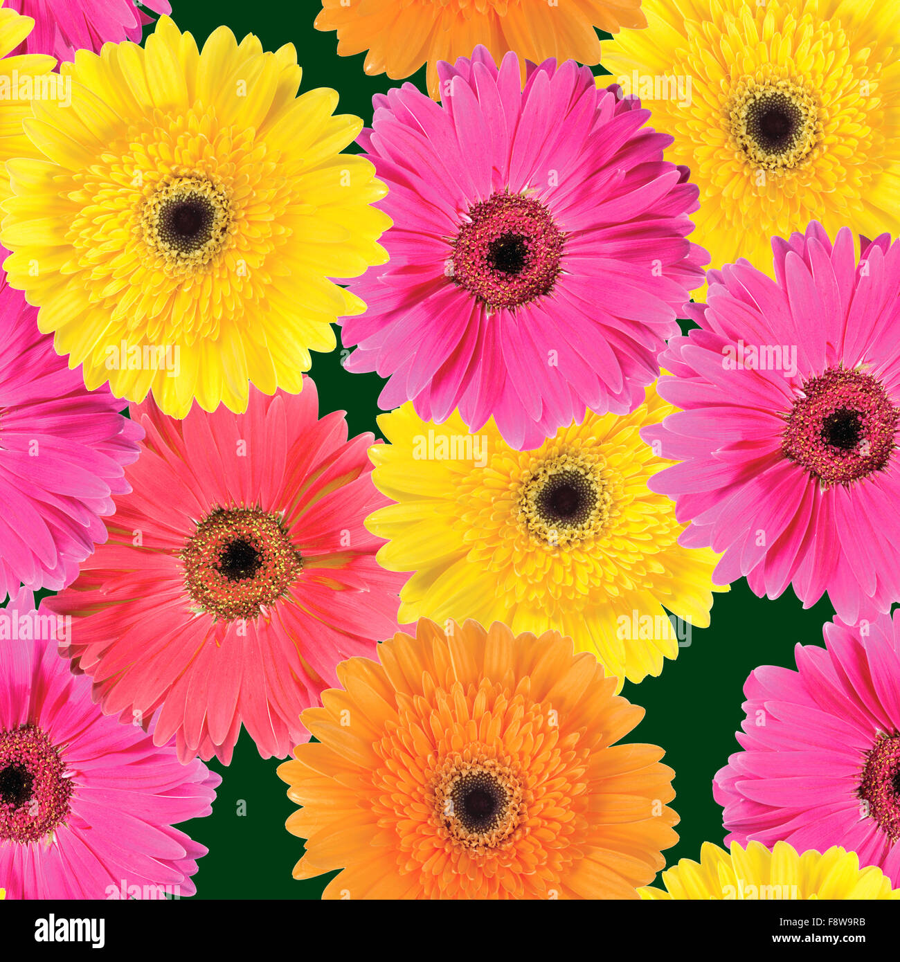 Background Of Pink Yellow And Orange Flowers Stock Photo 91525599