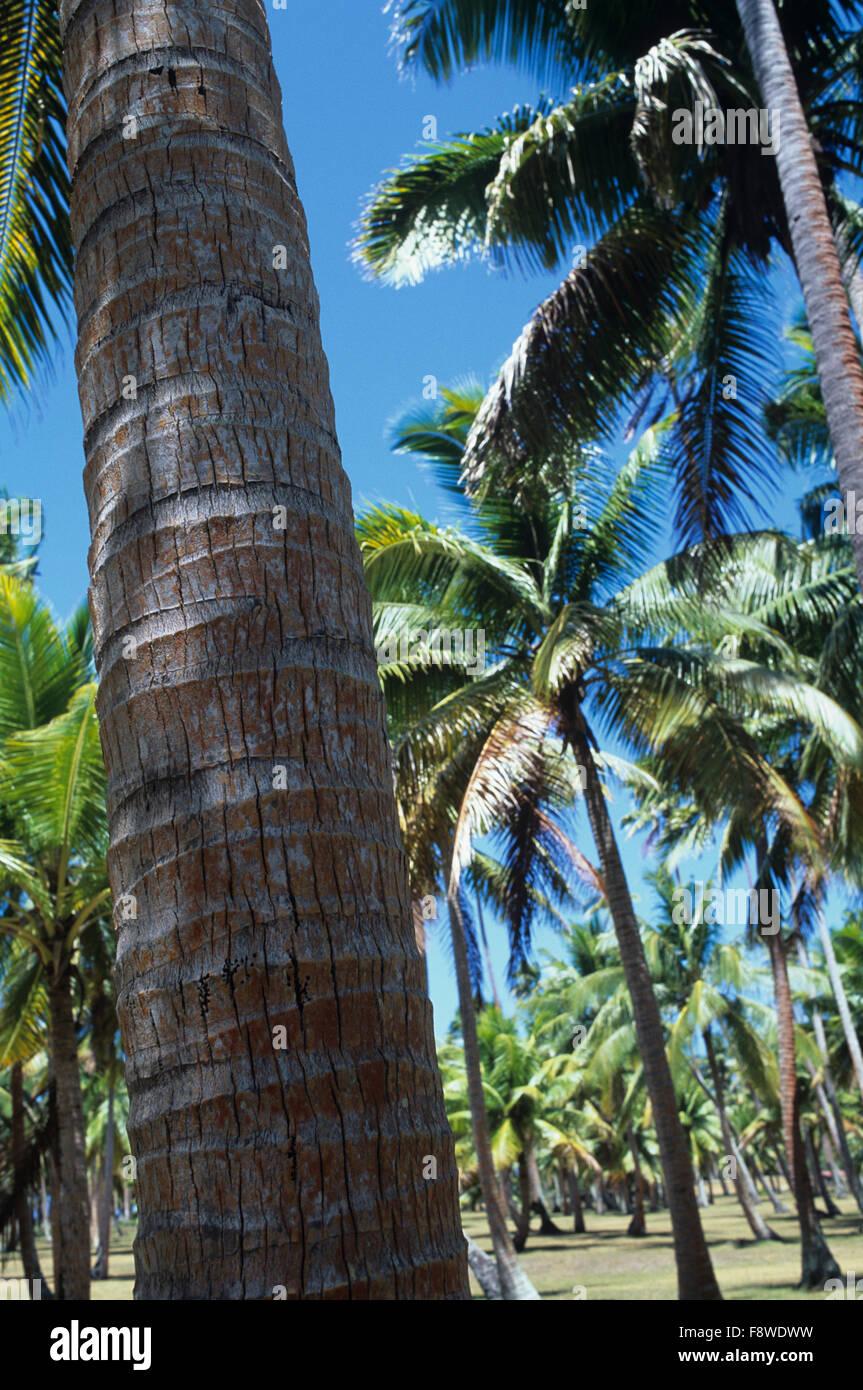 Fiji Islands, Wakaya Island, Wakaya Club, par 3 golf course in old copra plantation - Stock Image