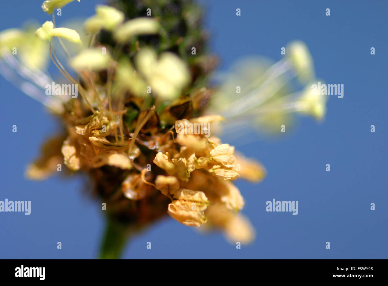 Close up of seed head - Stock Image