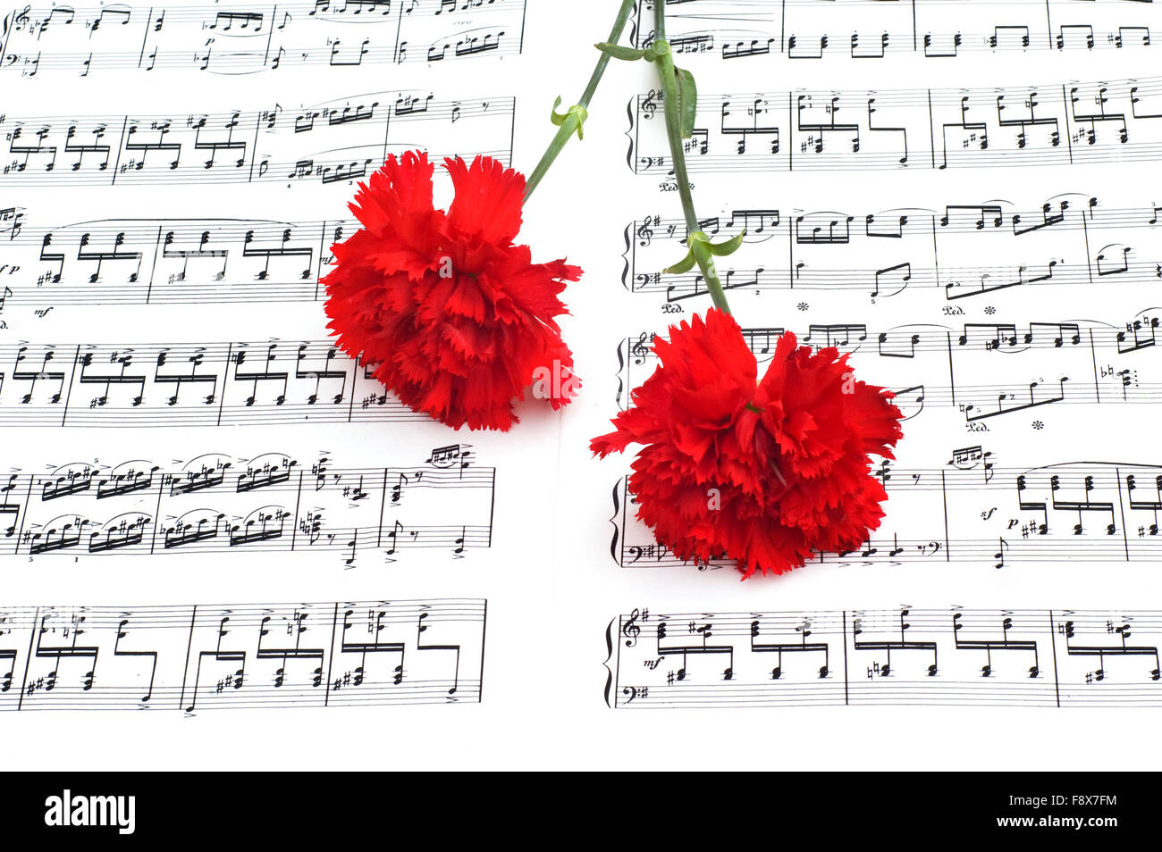 Red carnation flower on musical notes page stock photo 91545768 alamy red carnation flower on musical notes page ccuart Images