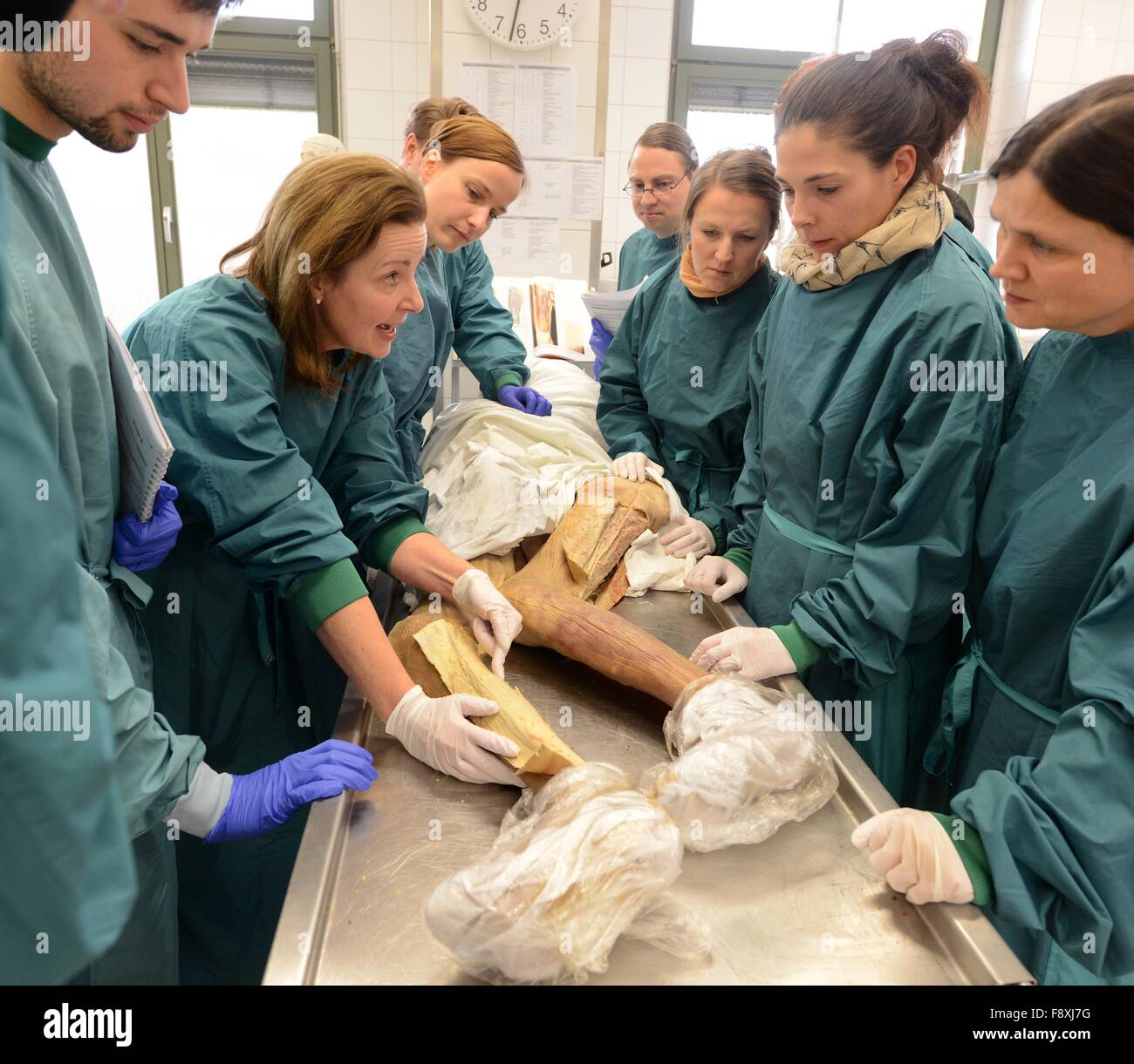 Prof.Dr.med. Heike Kielstein, head of anatomy and cell biology Stock ...