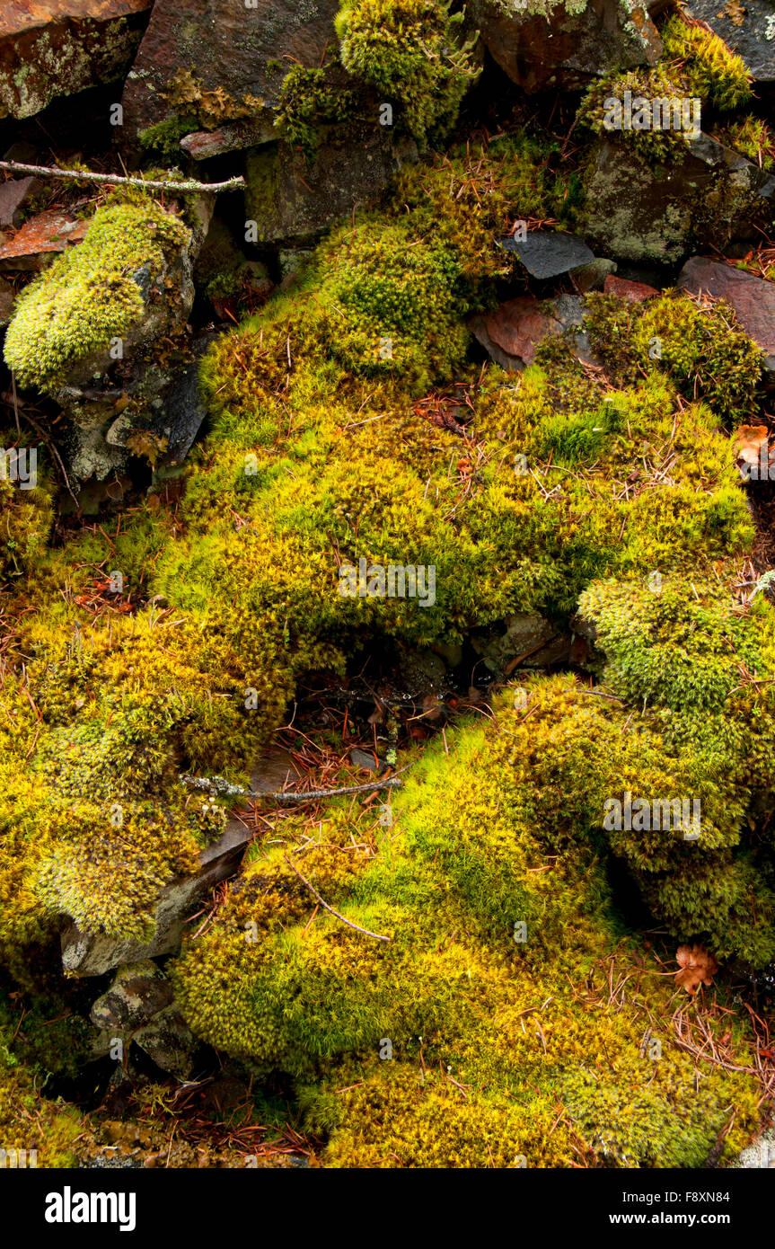 Moss along Cascade Falls Trail (Iron Mountain Road), St