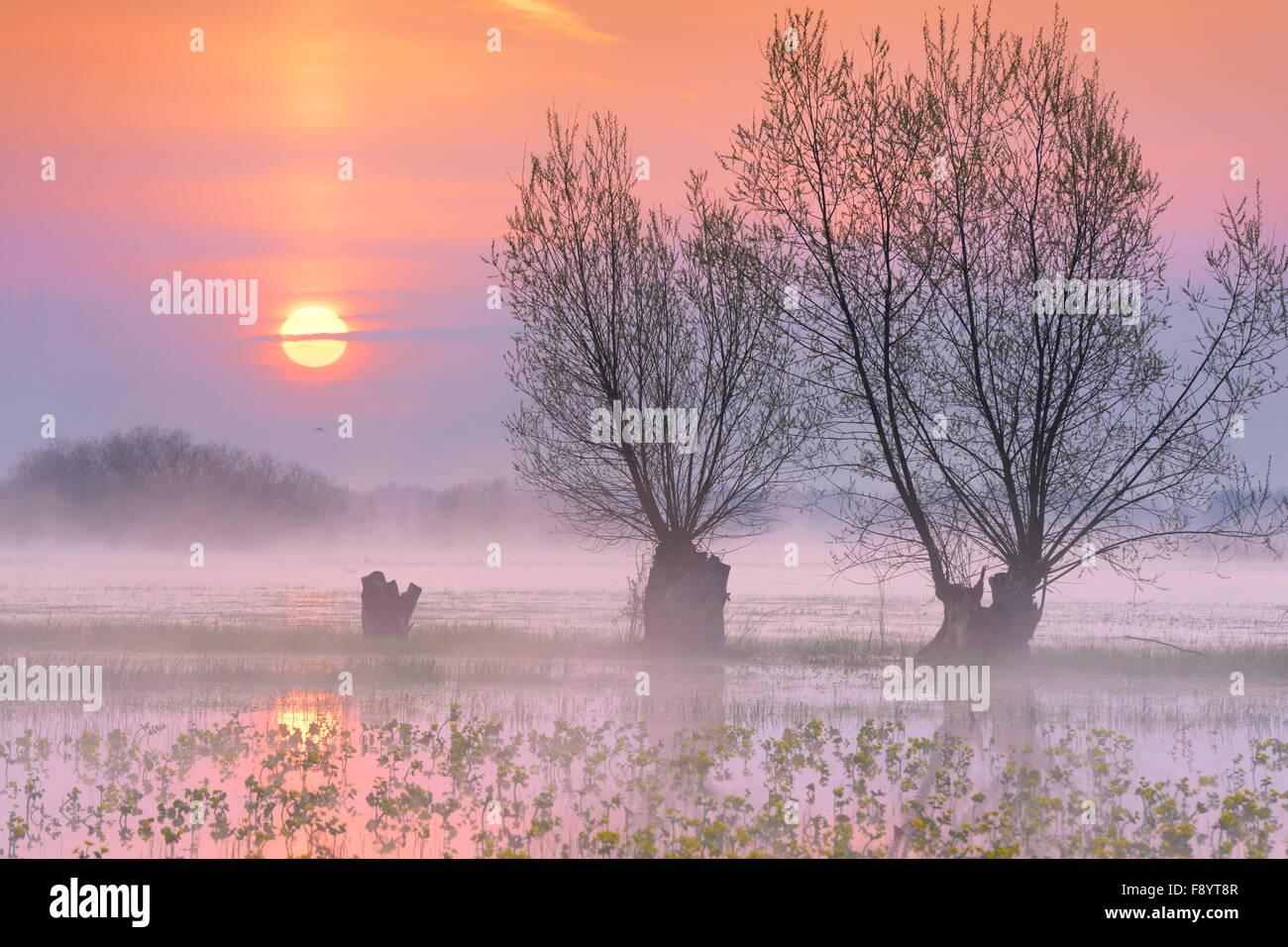 Sunrise landscape at Biebrza National Park, Podlasie region, Poland - Stock Image