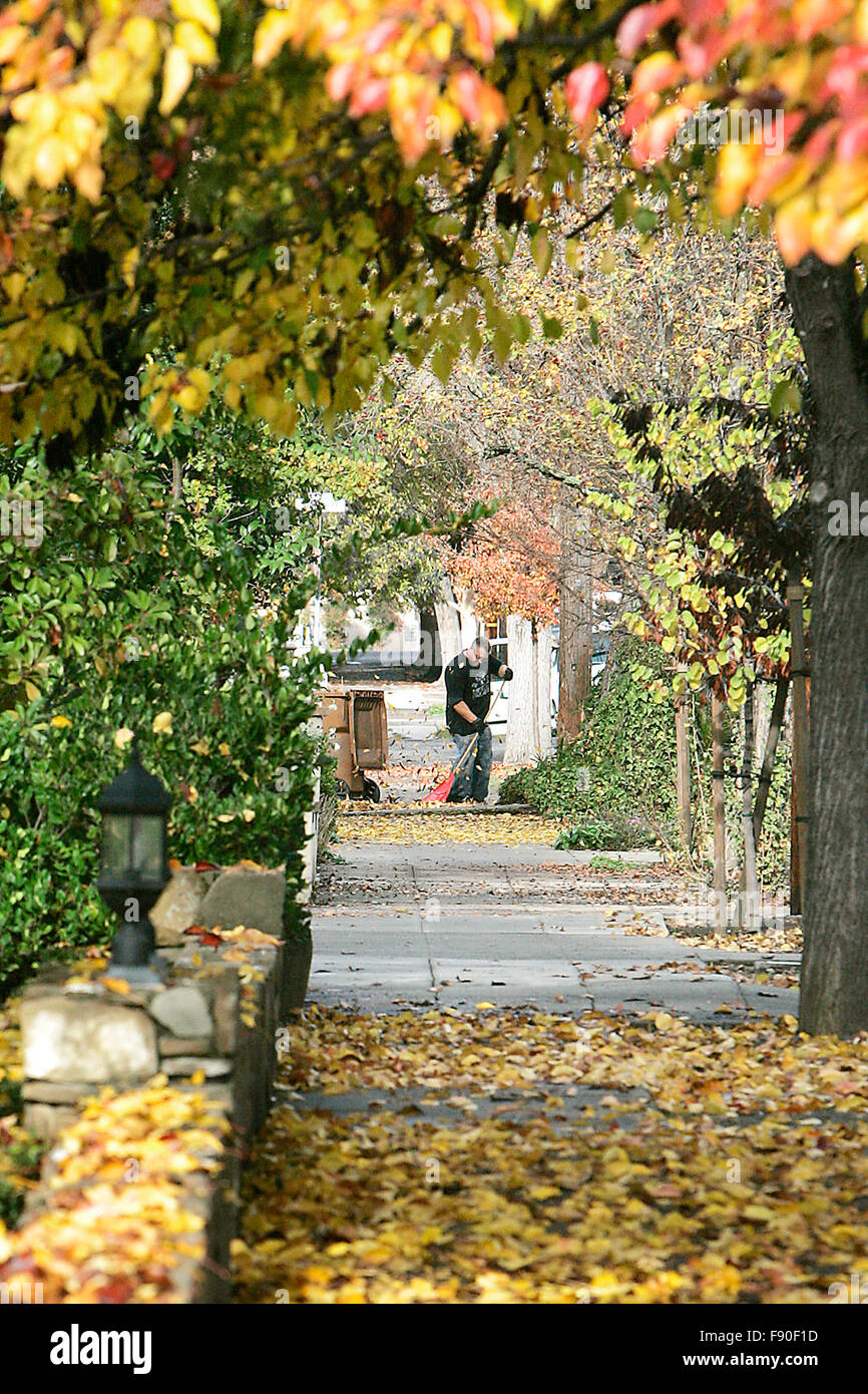 Napa, CA, USA. 7th Dec, 2015. A man is seen raking leaves in the Napa Abajo-Fuller Park Historic District on Monday - Stock Image