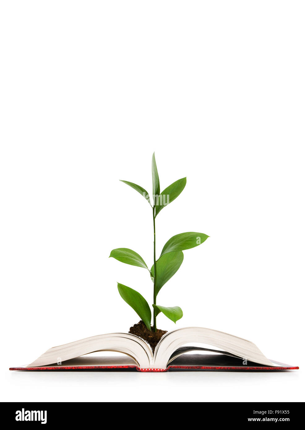 9a665a5928fae Knowledge concept - Leaves growing out of book Stock Photo: 91626225 ...