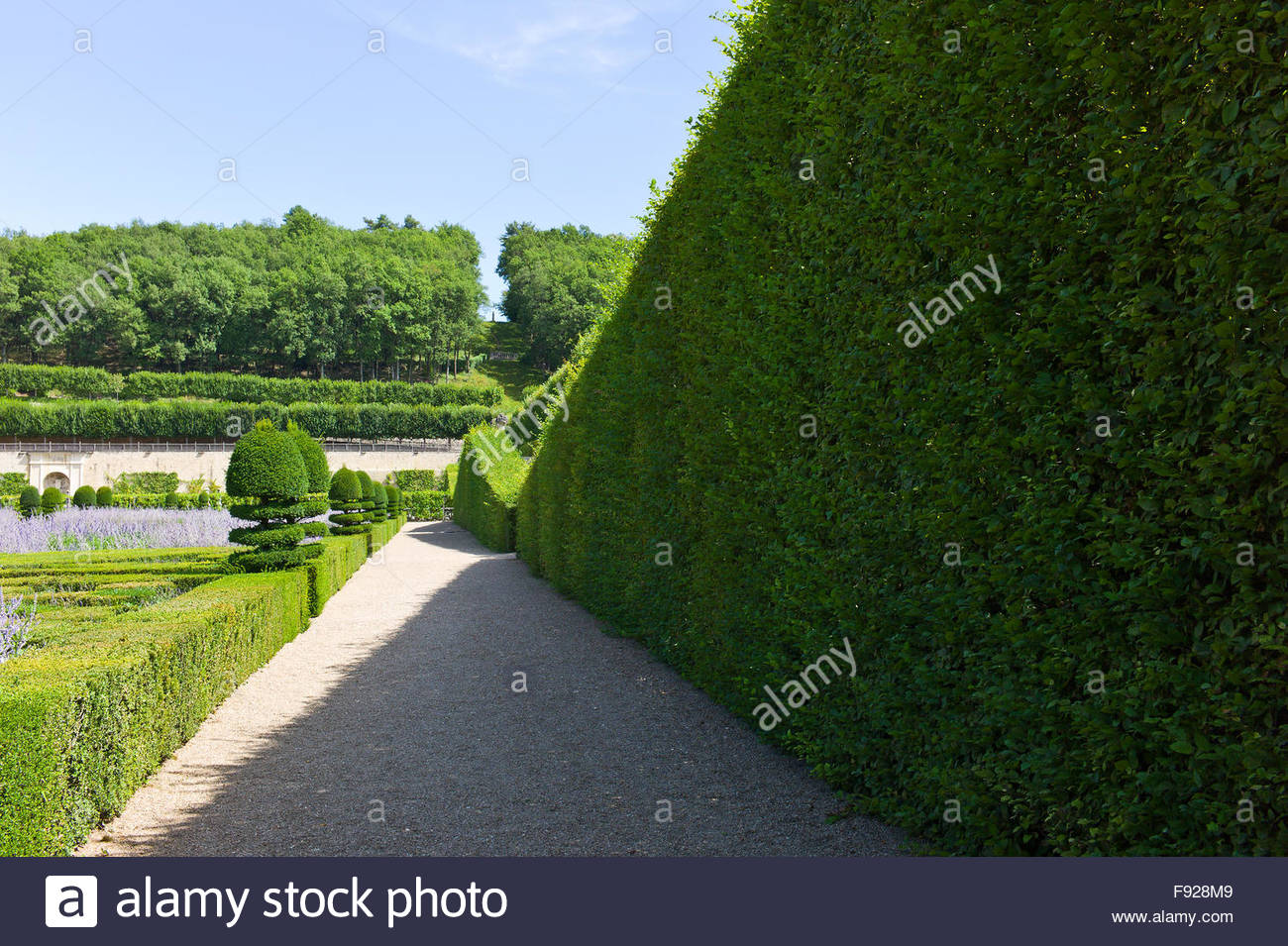 Hedges of Carpinus betulus, Buxus sempervirens and Taxus topiary at Chateau de Villandry, Loire Valley, France - Stock Image