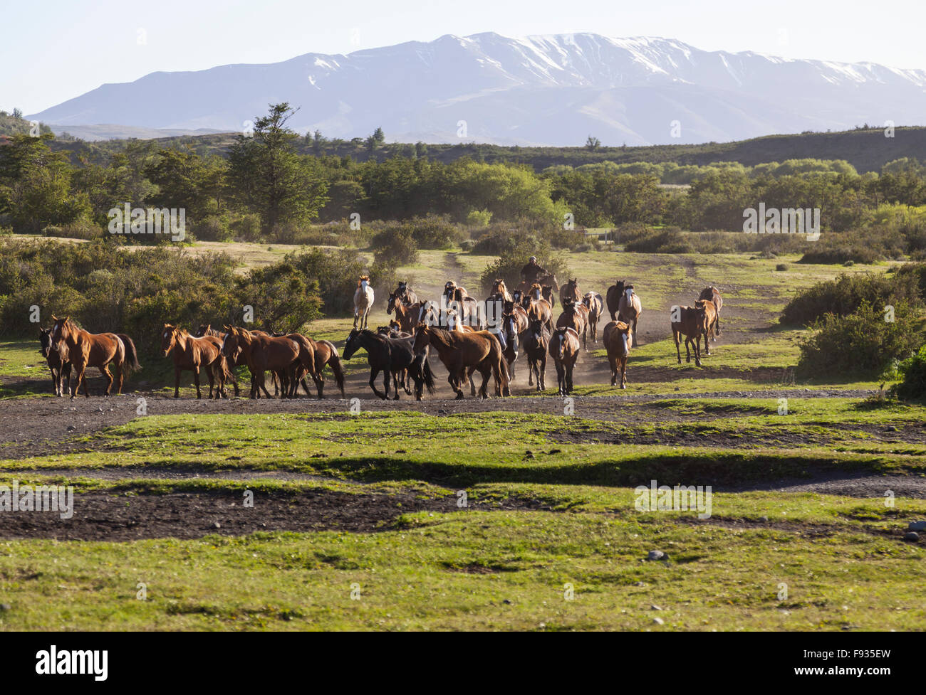 Rounding up horses, Patagonia - Stock Image