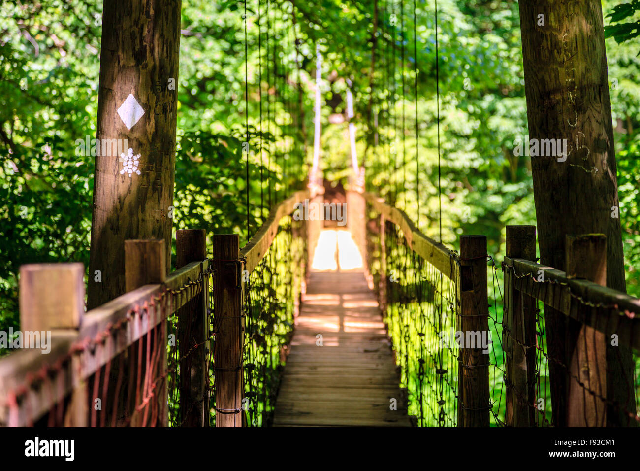 Hanging Bridge on Sheltowee Trace trail in Red River Gorge in Kentucky - Stock Image