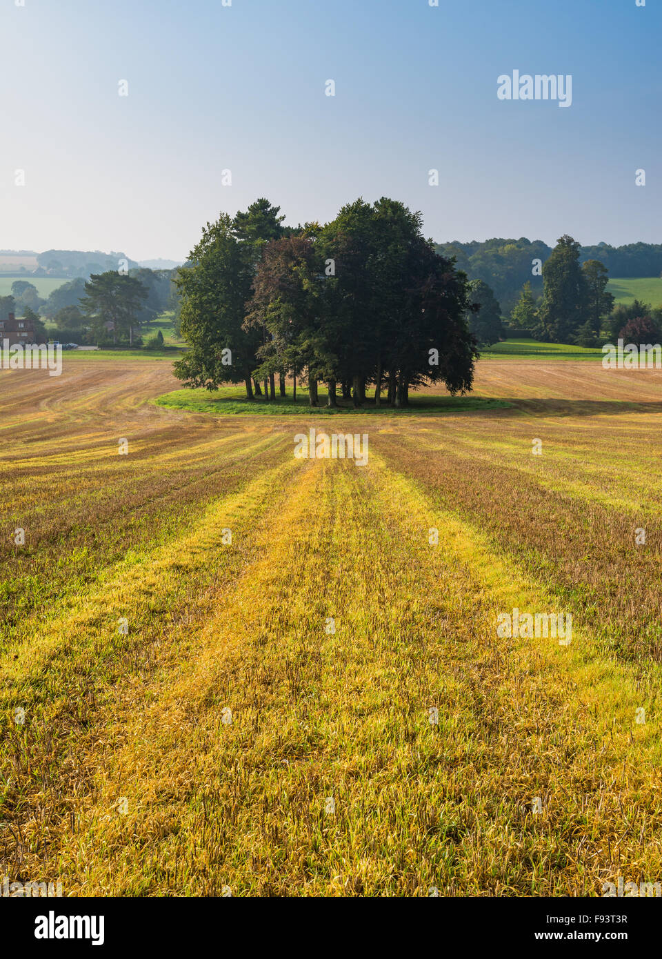 A view on the Kent Downs AONB, looking towards Swarling Manor, Petham, Kent. - Stock Image