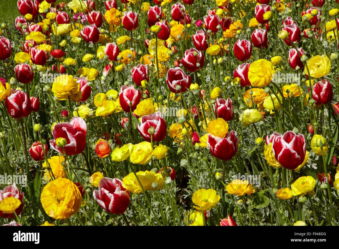Flower bed, Botanic Gardens, Hagley Park, Christchurch, Canterbury, South Island, New Zealand - Stock Image