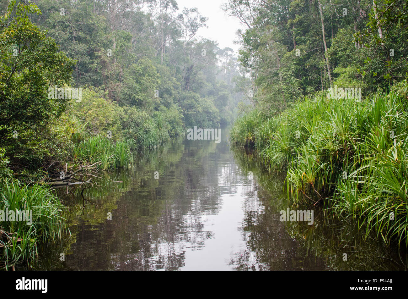 Waterway though Forest, Tanjung Puting National Park, Kalimantan, Indonesia - Stock Image
