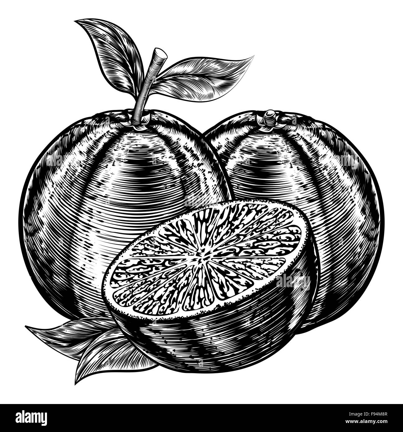 An original illustration of sliced oranges fruit in a vintage woodcut or woodblock style - Stock Image