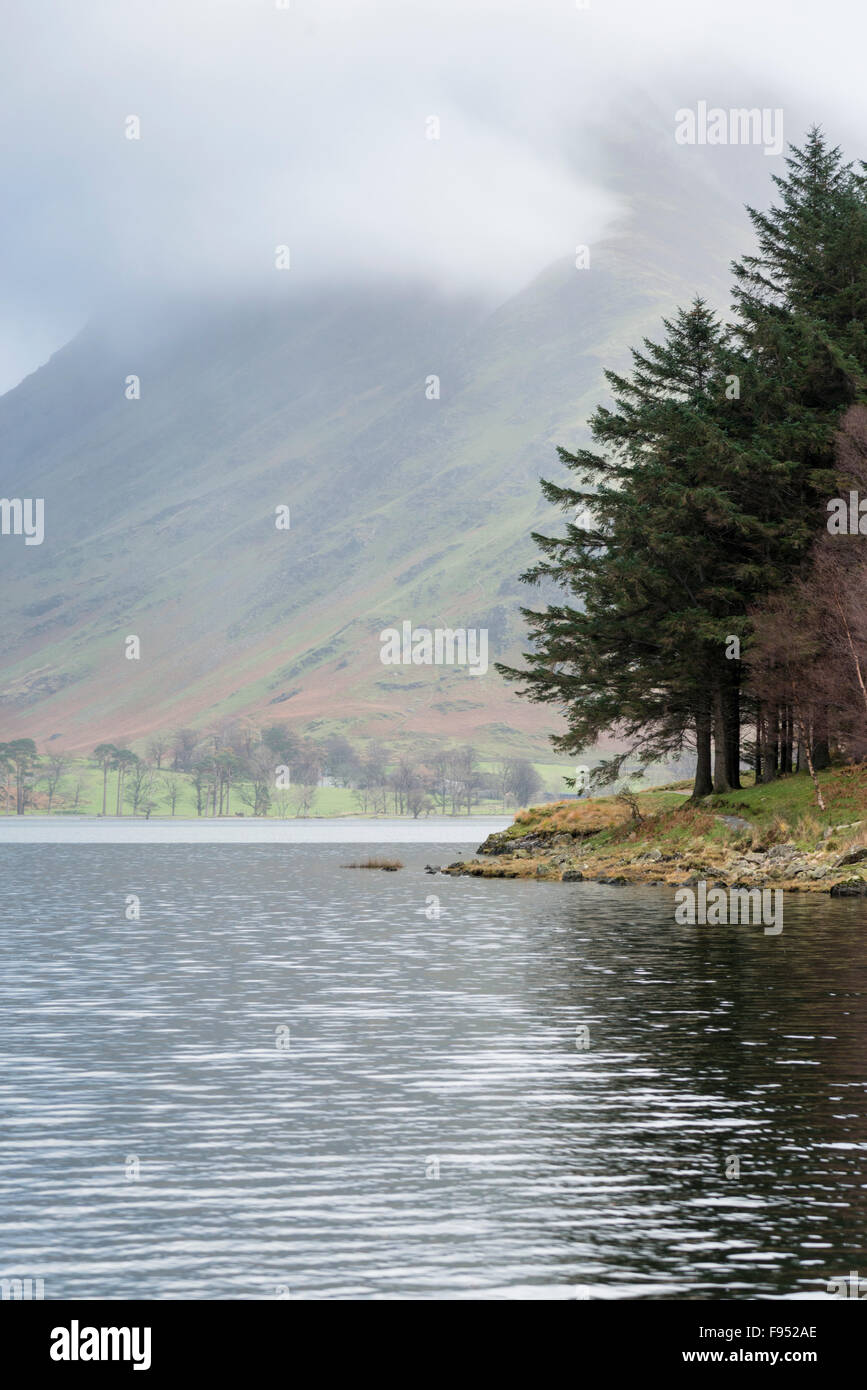A landscape of Pine trees on the edge of Buttermere in the Lake District, Cumbria UK on a n overcast day - Stock Image