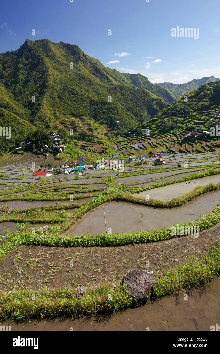 Agricultural rice terraces from Batad Philippines - Stock Image