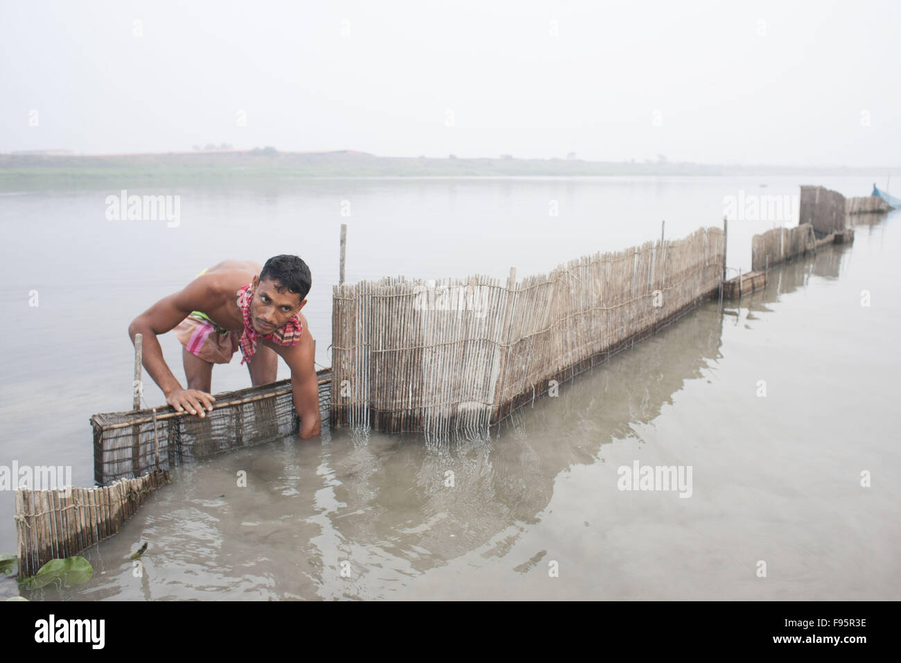 Dhaka, Bangladesh. 14th Dec, 2015. A Bangladeshi fisher man sets fish trap for catch fish at Savar, near Dhaka, - Stock Image