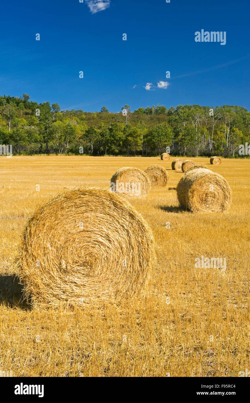 round straw bales and farmland, near Minnedosa, Manitoba - Stock Image