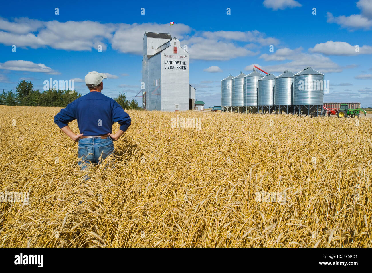 grain elevator and farmer in mature wheat field near Domremy, Saskatchewan, Canada - Stock Image