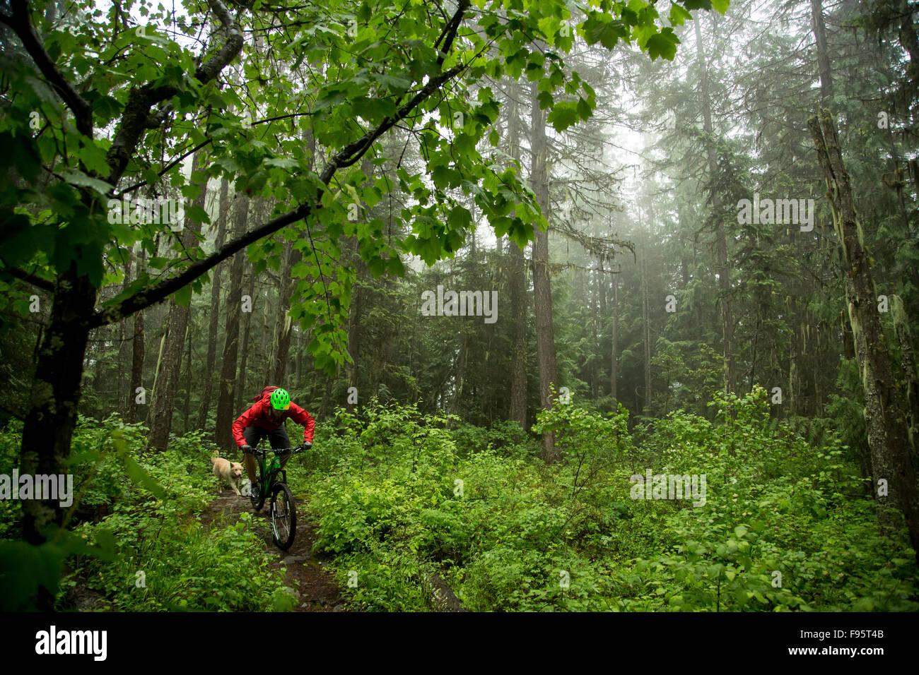 Mountain Biking, Crosscountry biking, forest, fog, Rossland, British Columbia, Canada, - Stock Image