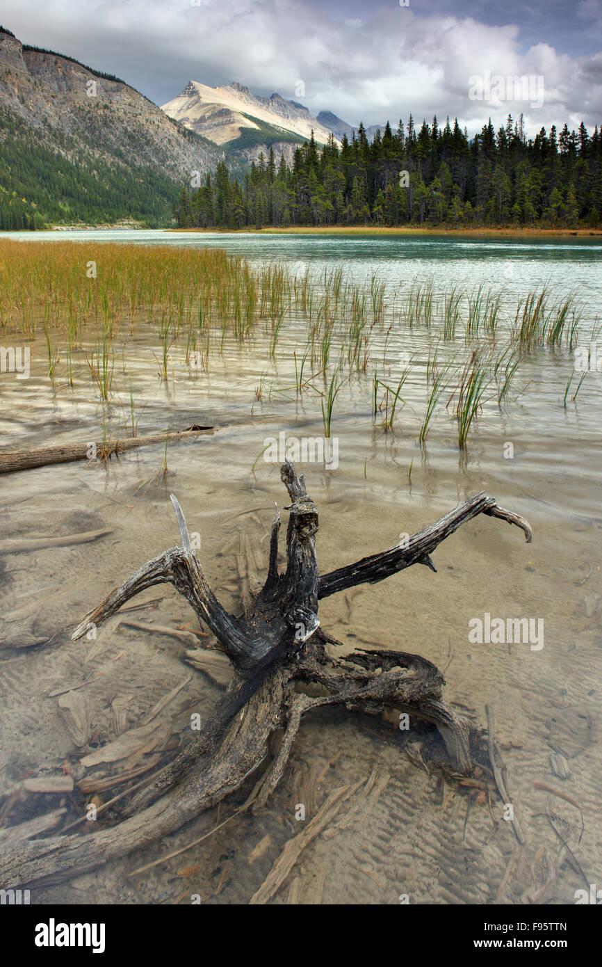 Lower Waterfowl Lake, Banff National Park, Alberta, Canada - Stock Image
