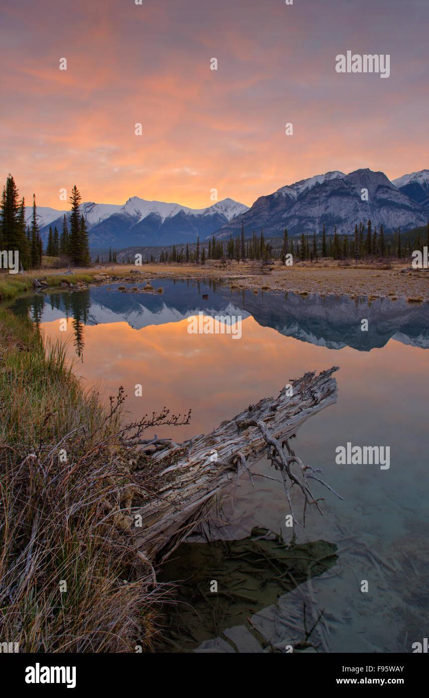Reflecting pool on the North Saskatchewan River at the Kootenay Plains, Alberta, Canada - Stock Image