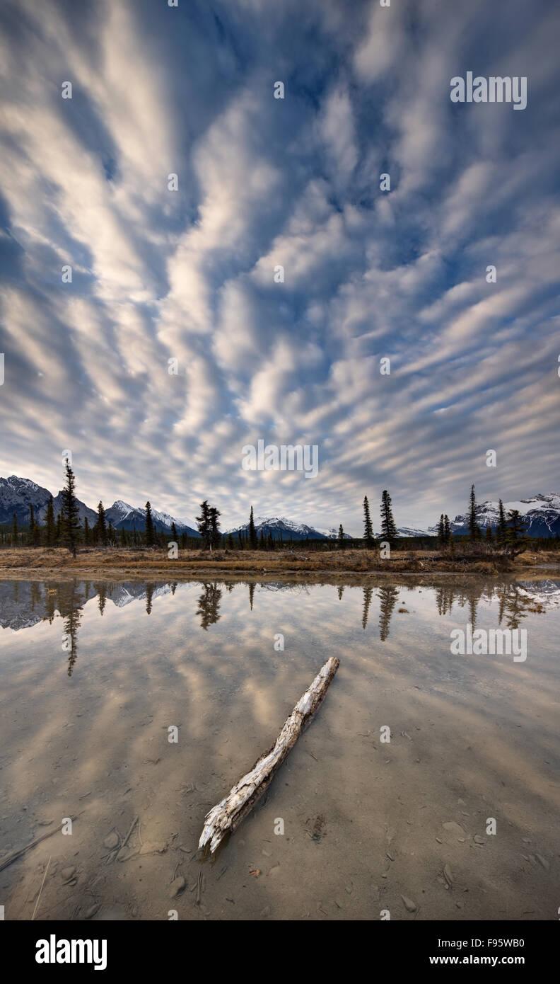 Reflecting pool along the North Saskatchewan River on the Kootenay Plains, Bighorn Wildland, Alberta, Canada - Stock Image